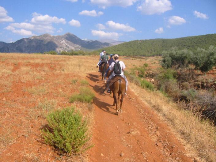 actividad caballos cursos de español en españa